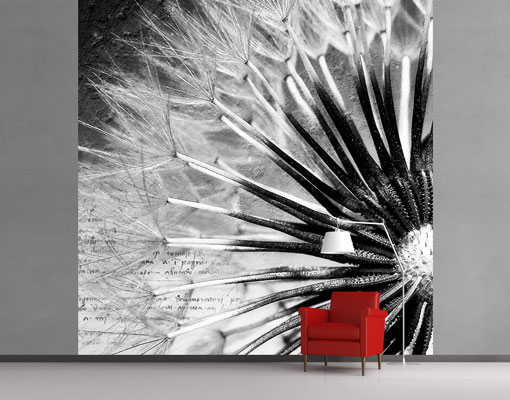 Fototapete schwarz weiß pusteblume  Vlies FotoTapete Pusteblume Schwarz & Weiß Foto Tapeten ...