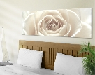 LeinwandBild No.11 Pretty White Rose 120x40 cm