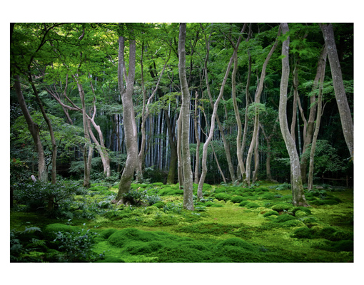 Photo wall mural fabulous forest 400x280 nature wallpaper for Mural nature