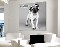 LeinwandBild Keith Kimberlin® Black N White Little Pug