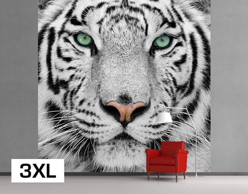 vlies fototapete tapete wei er tiger gef hrlich raubkatze tiere regenwald ebay. Black Bedroom Furniture Sets. Home Design Ideas