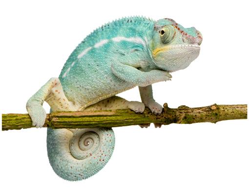 Vorhang Kinderzimmer Zoo :  kinderzimmerreptilienexotischdschungelregenbogenregenwaldzoo, 24