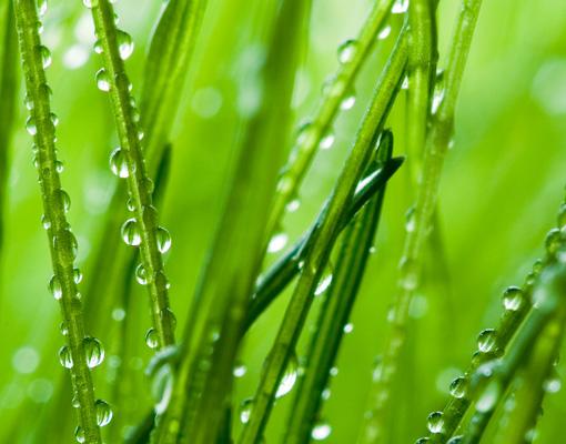 Vlies fototapete morgentau tapete gras fr hling frisch sommer wiese ebay - Fliesenaufkleber gras ...