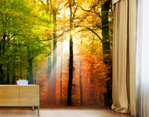 Photo Wall Mural FOREST LIGHTS 300x280 Wallpaper Wall Art Wall Decor Trees