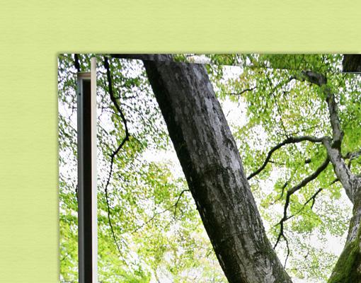 Fototapeten T?r – Selbstklebend : Fototapete T?r selbstklebend Alter Baum Tapete Pflanzen Ahorn Wald