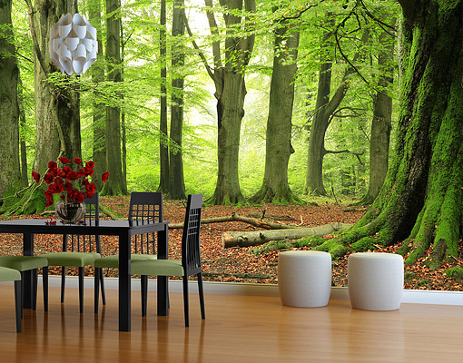 Photo wall mural mighty beech trees wallpaper wall art for Tree wallpaper for walls