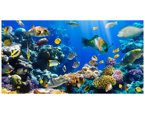 Fensterbild underwater reef meer ocean fische korallenriff wandtattoo korallen ebay - Fliesenaufkleber fische ...