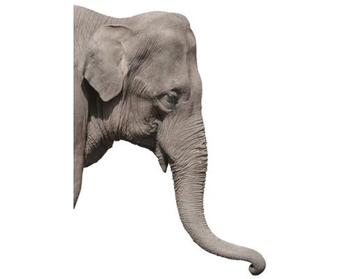 Wandtattoo elefant 80x114 wandsticker afrika grau gro tier ebay - Wandsticker elefant ...