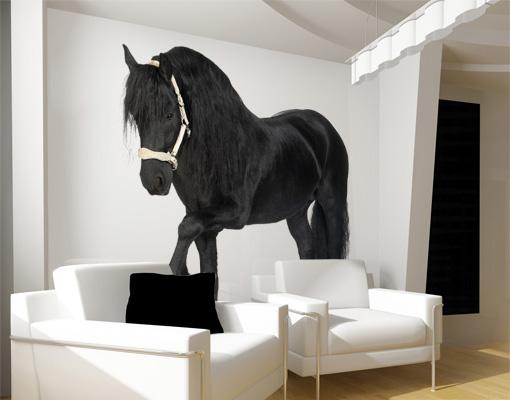 vlies fototapete friesenstute tapete pferde schwarz bauernhof reiten ebay. Black Bedroom Furniture Sets. Home Design Ideas