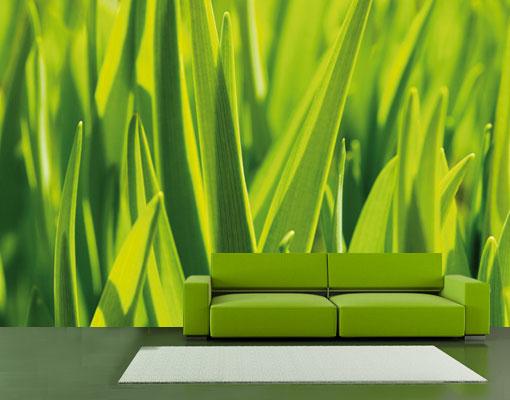 Fototapete inside the green tapete gras wiese frisch fr hling rasen ebay - Fliesenaufkleber gras ...