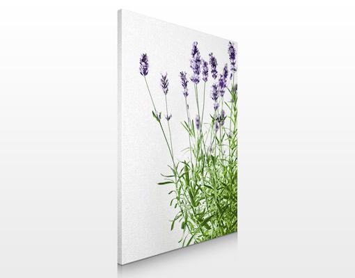 Leinwand bild bilder sommerlicher lavendel 60x80 druck for Fenster 60x80