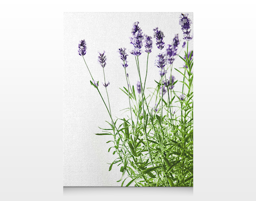 leinwand bild bilder sommerlicher lavendel 60x80 druck rahmen design garten duft ebay. Black Bedroom Furniture Sets. Home Design Ideas