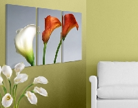 LeinwandBild Coloured Calla Triptychon I
