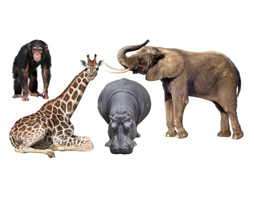 Kinderzimmer, Afrika, Elefant, Giraffe, Nilpferd, Affe  bilderwelten