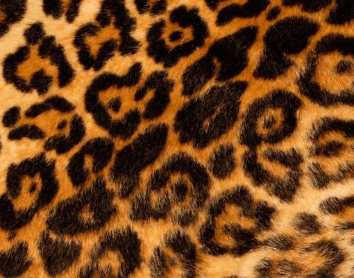 alu dibond print whitefinish jaguar skin pictures wildcat
