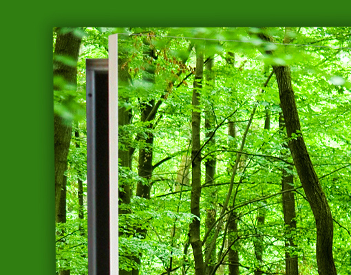Fototapeten T?r – Selbstklebend : Self Adhesive Forest Wall Mural