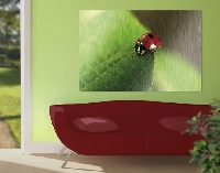 Alu Dibond Butlerfinish Bild Lady Bird