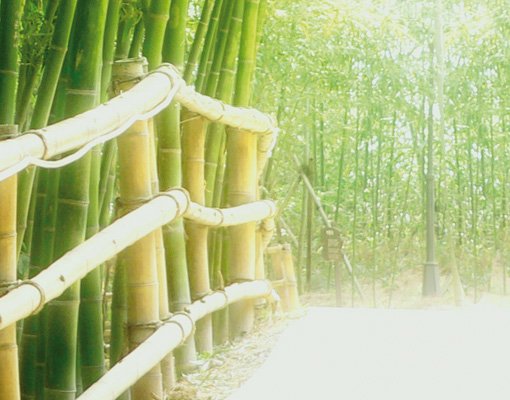 Photo wall mural bamboo walk 400x280 wall decor wallpaper for Bamboo forest wall mural wallpaper