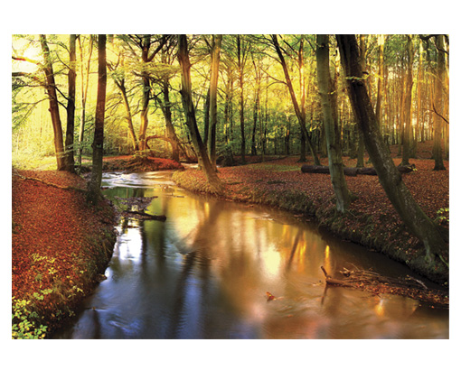 Photo wall mural fairytale autumn 400x280 wallpaper art for Autumn forest wall mural