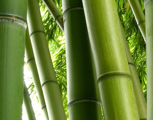 Fototapete bamboo tree no 2 tapete pflanzen bambus bl tter dschungel gr n ebay - Wandsticker bambus ...