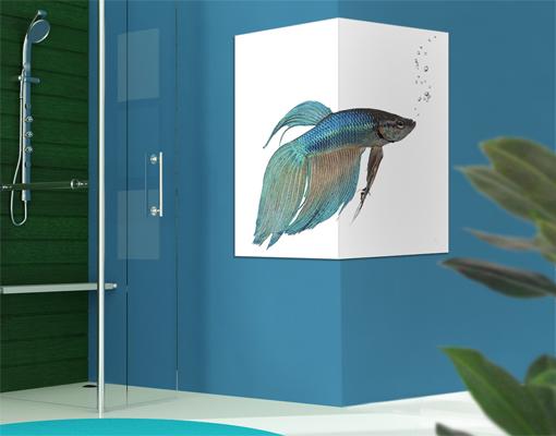 Eckleinwandbild siamesischer kampffisch ii 1 1 asien for Kampffisch shop