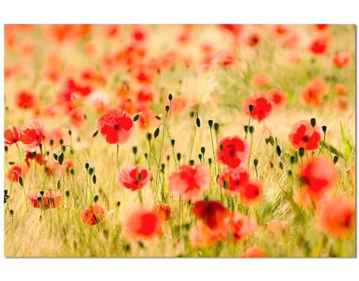 Alu Dibond Butlerfinish Bild Summer Poppies Blumen