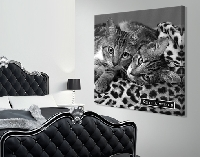 LeinwandBild Keith Kimberlin® Black N White On Leopard