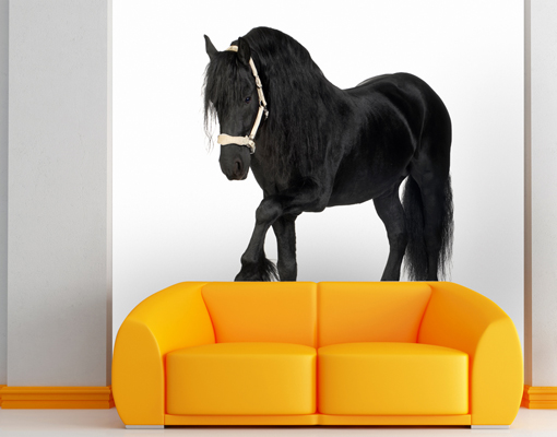 Photo wall mural frisian horse 300x280 wallpaper wall art wall decor animals ebay - Kamer paard meisje ...
