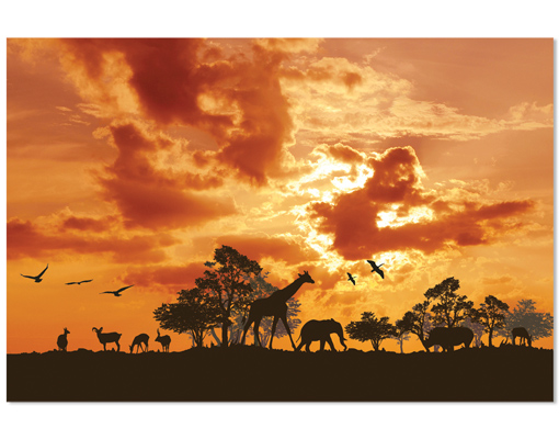 Hartschaum Bild Tanzania Sunset Afrika Savanne Giraffen