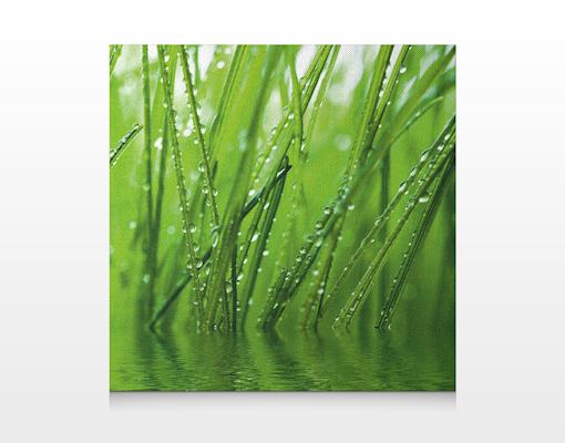 Leinwand bild bilder morgentau 70x70 pflanzen tropfen tau blatter gras ebay - Fliesenaufkleber gras ...