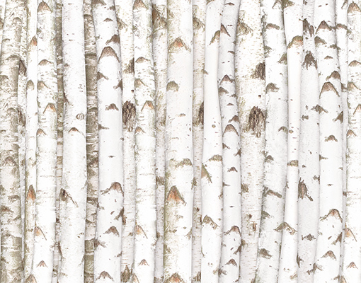 fototapete fototapeten tapete tapeten birch wall 400x280. Black Bedroom Furniture Sets. Home Design Ideas