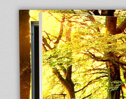Herbst-marchen-wald-baume-natur, 39.95 eur @ bilder-welten-net-de