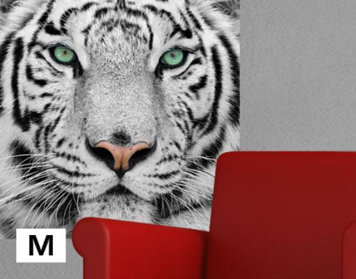 vlies fototapete tapete wei er tiger gef hrlich raubkatze. Black Bedroom Furniture Sets. Home Design Ideas